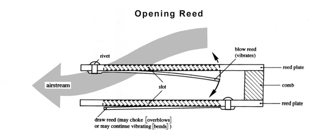 Opening%20Reed